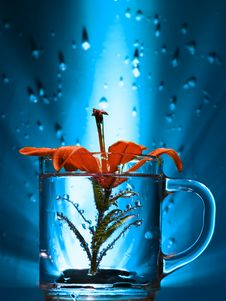 Free Flower In A Glass Stock Image - 3160991