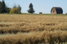 Free Field And Barn Stock Photo - 3161400