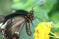 Free Butterfly Landing On Plant Stock Image - 3163181