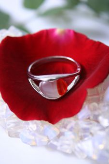 Free Ring On A Petal Stock Image - 3163321