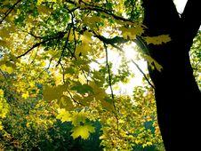 Free Autumn Light Stock Photography - 3163782