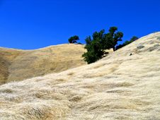 Free Mt. Tamalpais Grass Fields Royalty Free Stock Photo - 3164115