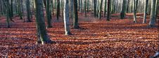 Free Autumn Forest Royalty Free Stock Photography - 3164817