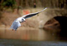 Free Wings Stock Photos - 3164823