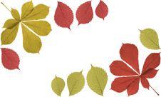 Free Autumn Frame Stock Photography - 3165082