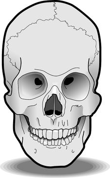 Free Human Skull Stock Photos - 3165203