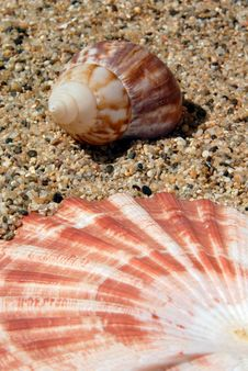 Free Sand And Sea Shell Stock Image - 3165411