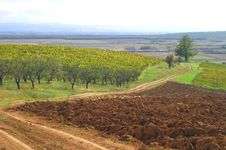 Free Vineyard And Nice Landscape Royalty Free Stock Photos - 3166148
