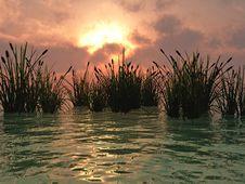 Free Water Grass Stock Photos - 3166553