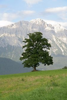 Free Tree In Mountains Stock Photos - 3167543