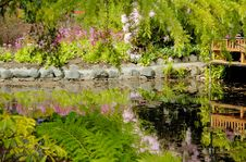 Pond In Japanese Garden Royalty Free Stock Photography