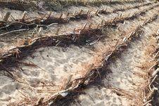 Free Sand Holding Fences Royalty Free Stock Photography - 3167977