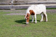 Free Grazing Pony Stock Photos - 3168013