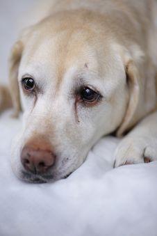 Free Depressed Doggy Stock Image - 3169571