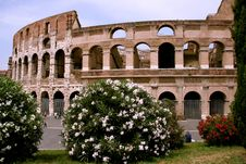 Free Colosseum And Flowers Royalty Free Stock Image - 3169956