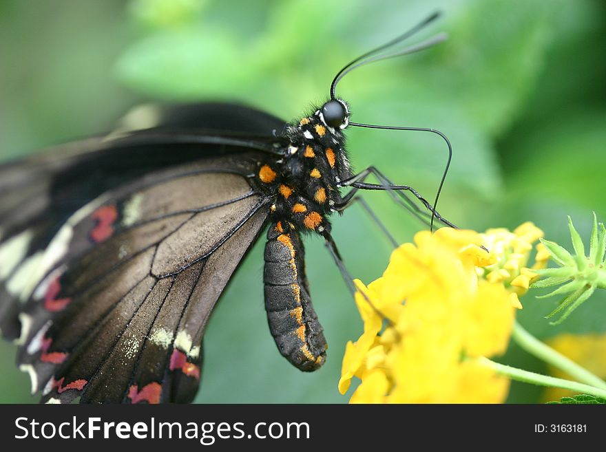 Butterfly Landing on Plant