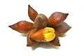 Free Zalacca Or Salak Fruit Royalty Free Stock Image - 31601366