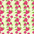 Free Vector Seamless Pattern With Magnolia Royalty Free Stock Photos - 31603918