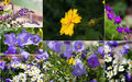 Free Spring Flowers Royalty Free Stock Images - 31612239