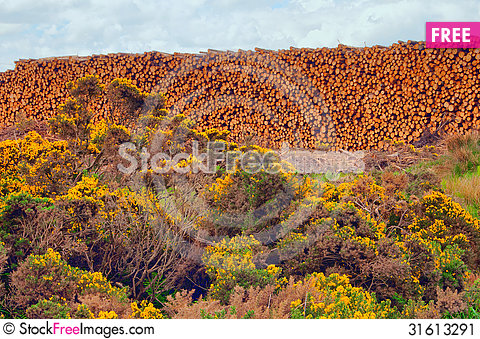 Free Cut Down Trees Stock Image - 31613291