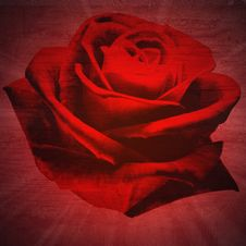 Free Red Rose Petals Close-up Royalty Free Stock Photo - 31613785