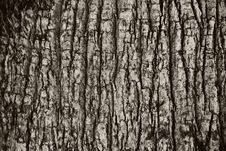 Free Tree Bark Texture Royalty Free Stock Photos - 31622008
