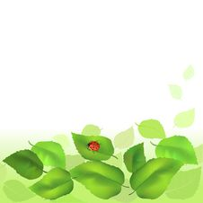 Free Summer Background With Green Leaves Stock Images - 31622984