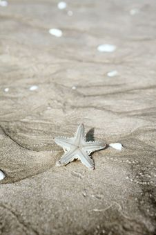 Free Starfish On Sand Stock Photo - 31624240