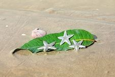 Starfishes , Sea Shell And Leaf On The  Sand Royalty Free Stock Photo