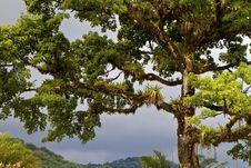 Free Bromeliads Stock Photography - 31628282
