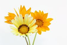 Free Treasure Flower On A White Background Royalty Free Stock Photography - 31630927
