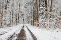 Free Forest Covered With Light Wet Snow Stock Photography - 31641382