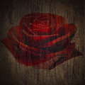 Free Deep Red Roses Royalty Free Stock Images - 31646749