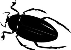 Free Beetle Stock Photo - 31642080