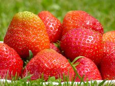 Free Strawberries Stock Images - 31642944