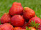 Free Strawberry Royalty Free Stock Photos - 31643168