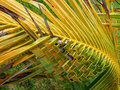 Free The Hand-twisted Palm Leaf Royalty Free Stock Photos - 31651798