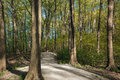 Free The Path In The Spring Park Royalty Free Stock Image - 31652886