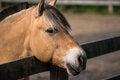 Free Friendly Brown Horse Portrait Stock Photos - 31653293