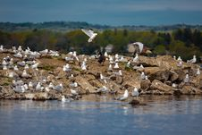 White Seagulls On The Rocky Lake Bank Royalty Free Stock Photography