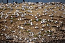 Free Seagulls Meeting On The Ground Stock Images - 31653084