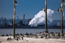 Free Birds Island On The Industrial Background Stock Photos - 31653103