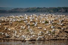 Free Seagulls Harbour On The Island Royalty Free Stock Image - 31653106