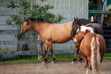 Free Three Horses Standing On The Farm Stock Photos - 31653283