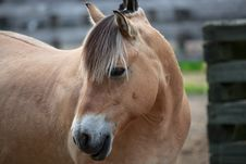 Free Friendly Brown Horse Portrait Royalty Free Stock Images - 31653289