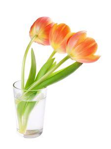 Free Tulips Stock Image - 31653421