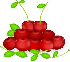 Free Fresh Cherries Stock Photos - 31653923