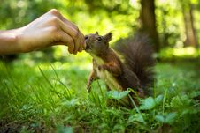 Free Squirrel Stock Photos - 31659203