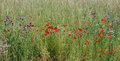 Free Summer Flowers Stock Photos - 31666583