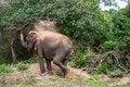 Free Wild Elephant Stock Image - 31668641